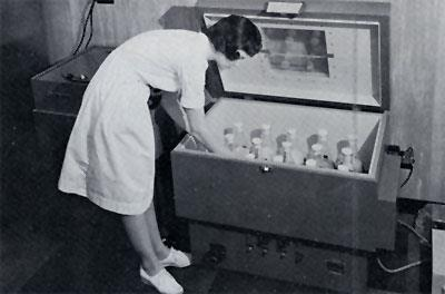 Mrs. Darrell Henderson examines a 2 gallon batch of Histoplasma capsulatum growing in an incubator-shaker. All flasks are capped and the shaker can be completely sealed as an additional safeguard. Organisms grow for 20 days at constant temperature with agitation before they are harvested.