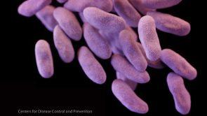carbapenem-resistant-Enterobacteriaceae-16-x-9
