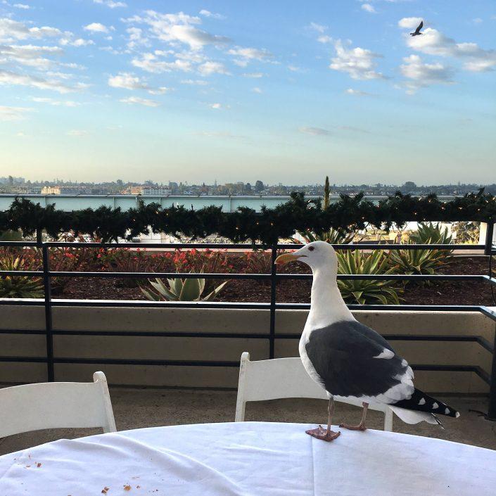 """A """"bird's eye"""" view from breakfast."""