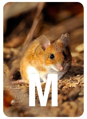 m-front