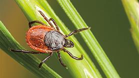 The Essentials of Ticks and Tick-Borne Diseases