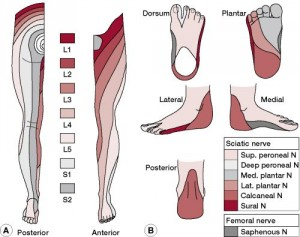 Regional Aspects of Foot
