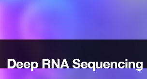 Deep RNA Sequencing
