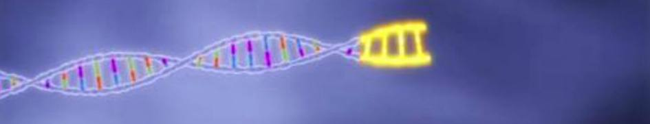 gene sequencing 1A