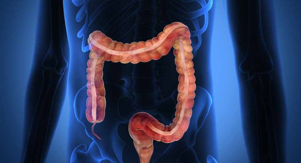 illustration-of-colon