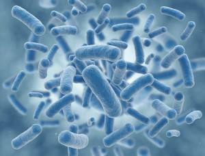 bacteria_virus-300x228