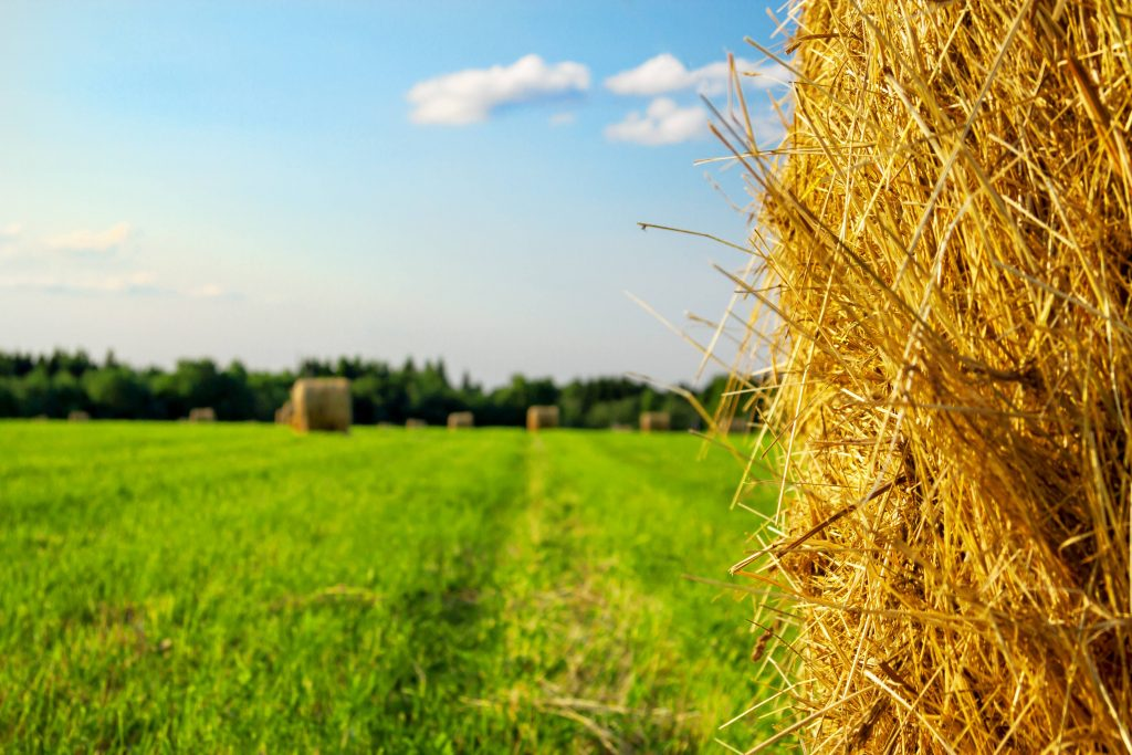Finding the needle in the haystack: a tool for rare inherited diseases