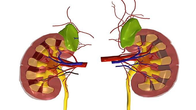 Kidney Smart Class