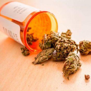 UCLA Researchers Study Societal Impacts of Marijuana
