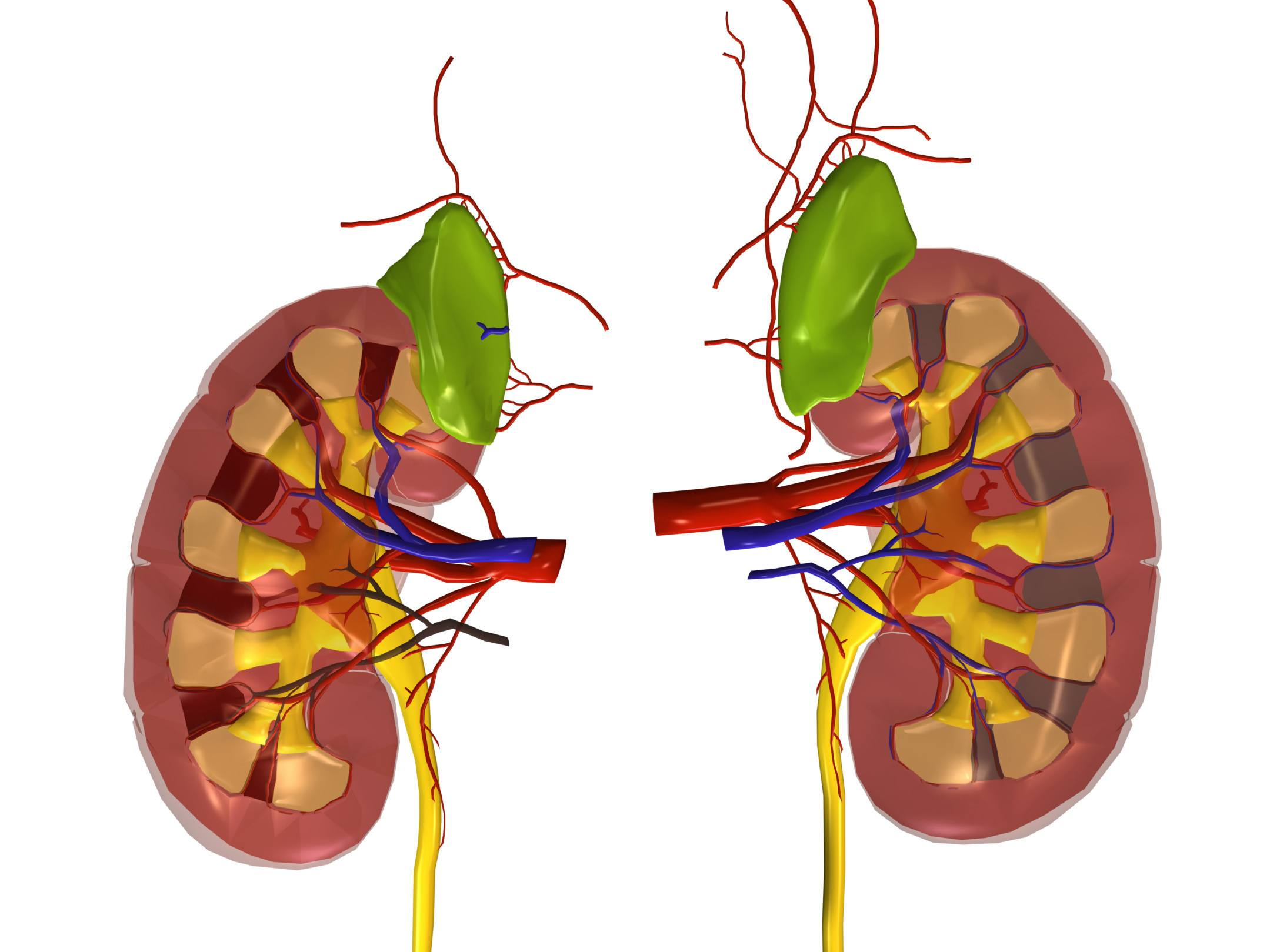 Virtual UCLA CORE Kidney Health Fair