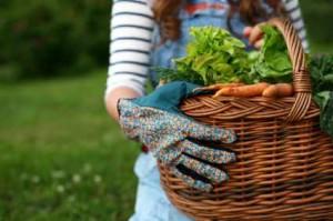 GardenerBasket