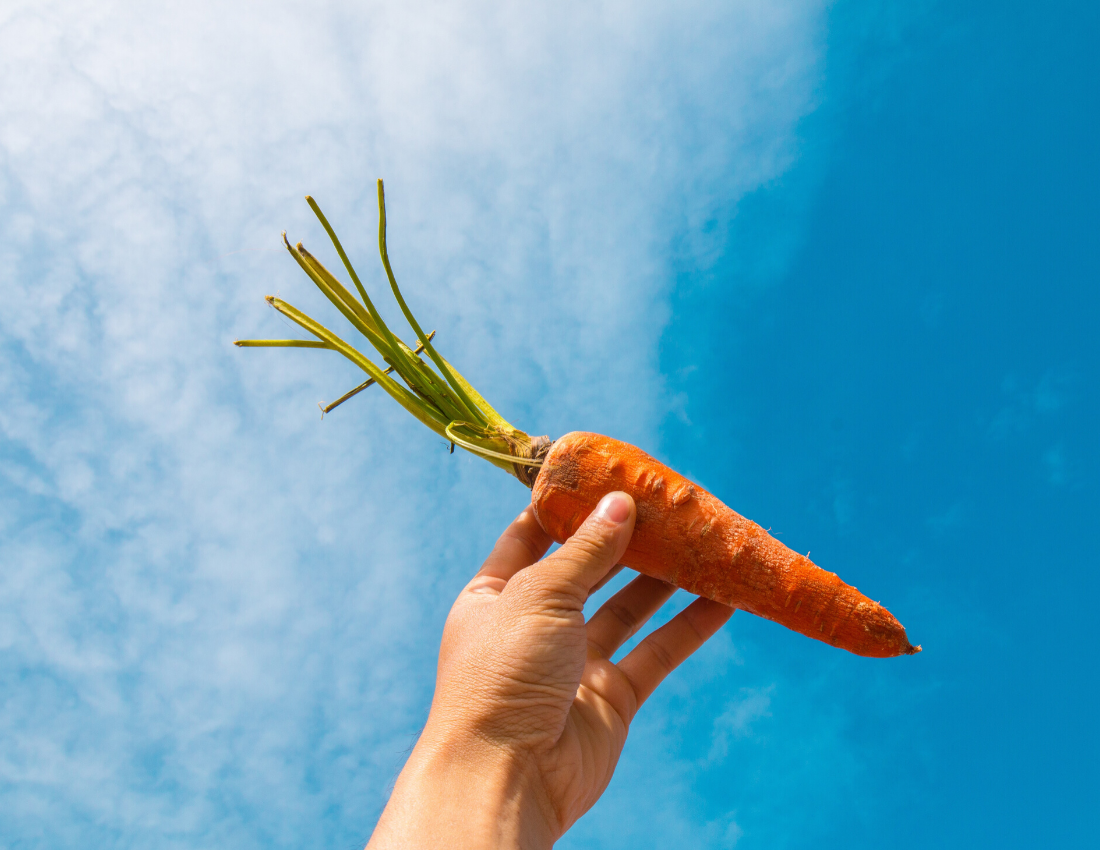 April - The Month of the Carrot!