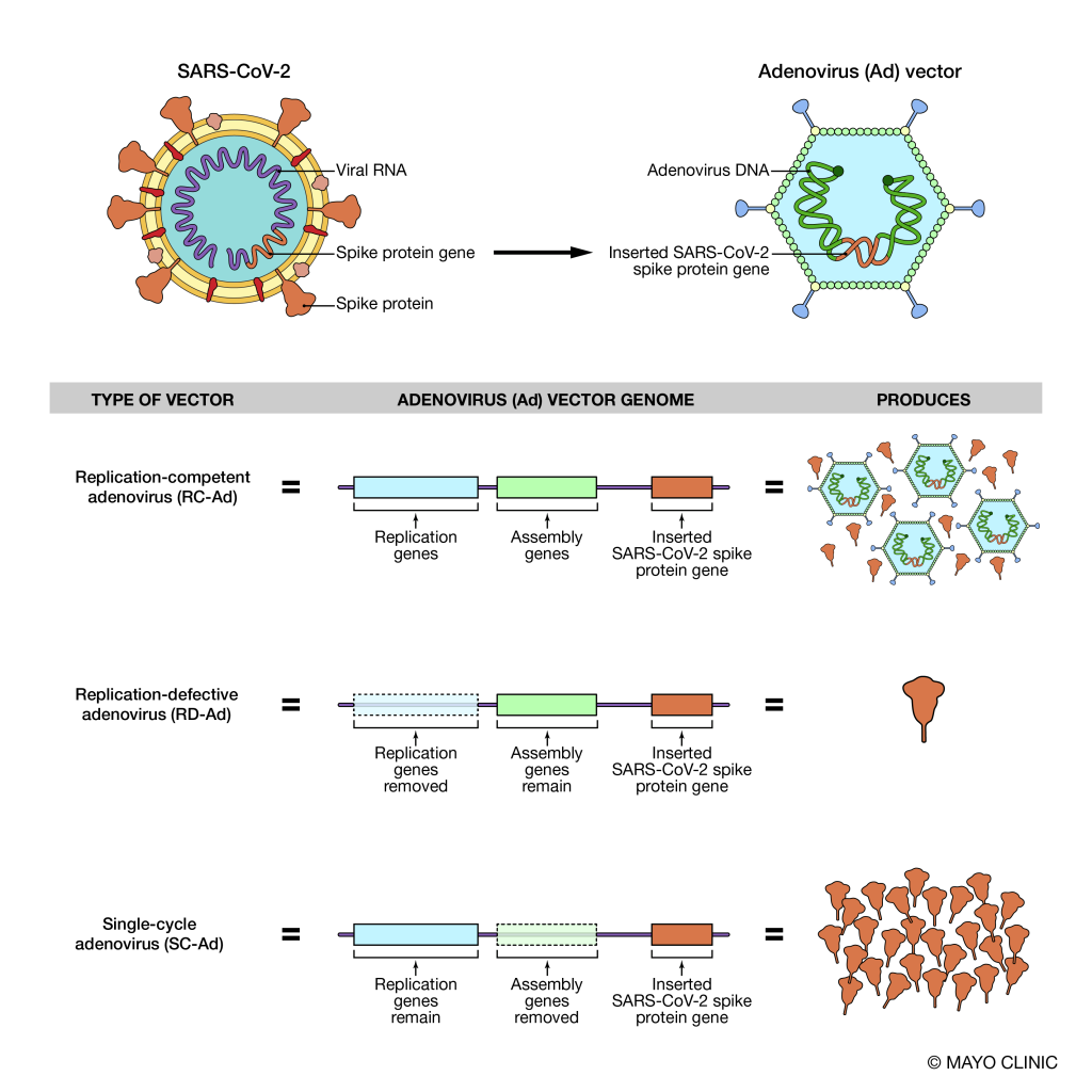 Illustration to show the difference between viral vectors and what they produce.