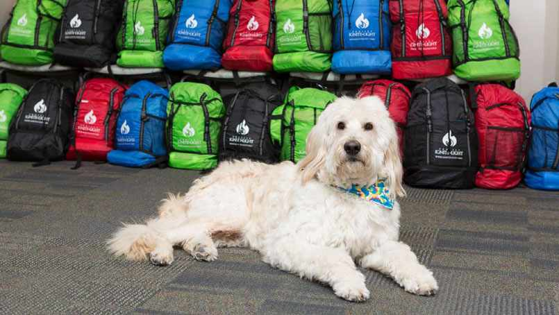 Hasbro is a pet therapy dog at the Mayo Clinic Child and Family Advocacy Center in Rochester, Minnesota.