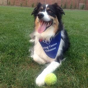 Mayo Clinic's Caring Canine Therapy Dog Program