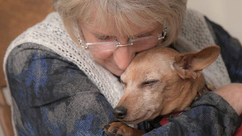 Marcia Fritzmeier and Dr. Jack spent more than a decade as a facility-based service dog at Mayo Clinic, providing comfort to many patients during his tenure.