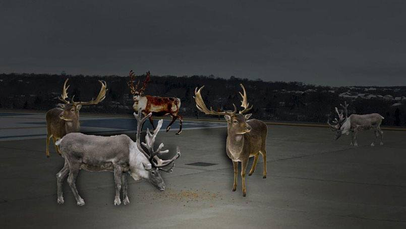reindeer805