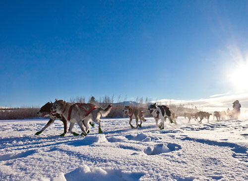 Mayo Nurse Practitioner Competes in Her 15th (and Perhaps) Final Iditarod