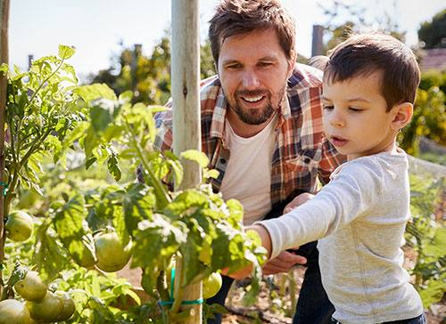 Dig In To a Garden To Get Healthier, Happier