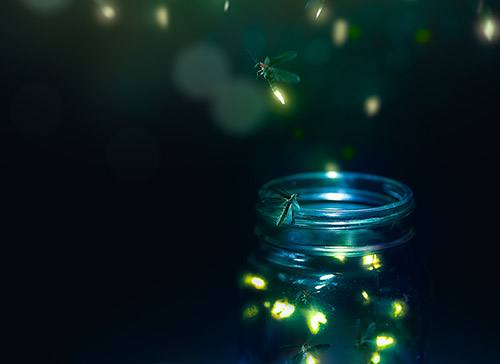 Fireflies (and the Radiation Therapist Who Caught Them) Light Up Patient's Time at Mayo