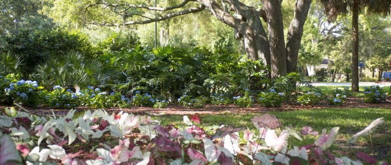 4019f4247b-jaxplants.jpg