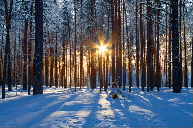 winter-small2