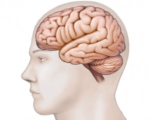 illustration of human head profile with brain structure visible