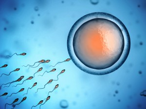 Fertility - Microscopic image of sperm and egg