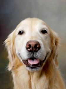 Un perro como animal doméstico