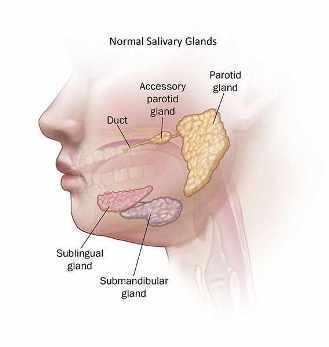 Ilustración de glándulas salivales normales.