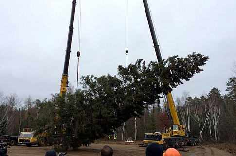 Minnesota tree being loaded up by cranes for trip to U.S. Capitol Christmas