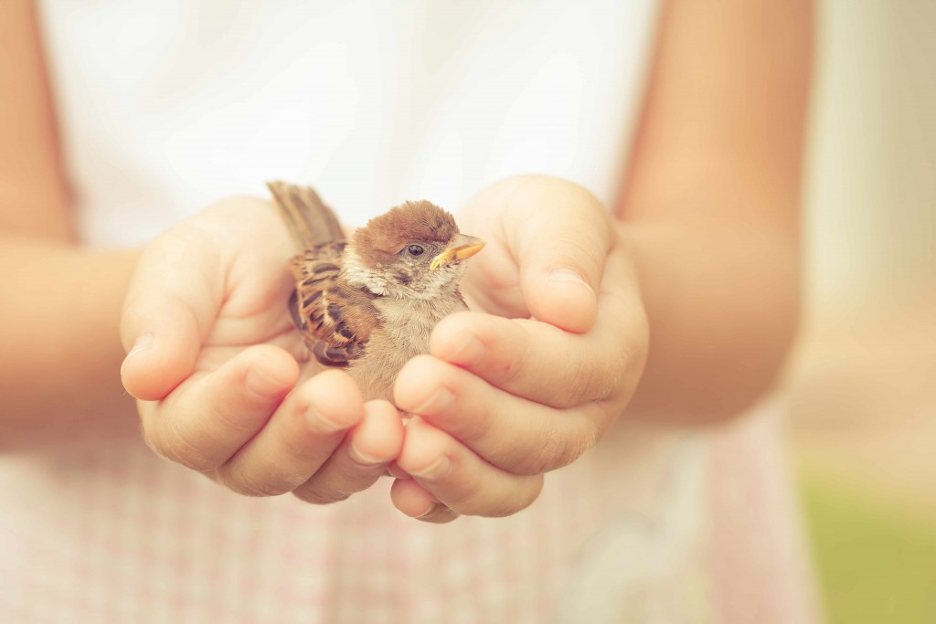 sparrow sitting in child's hand showing kindness