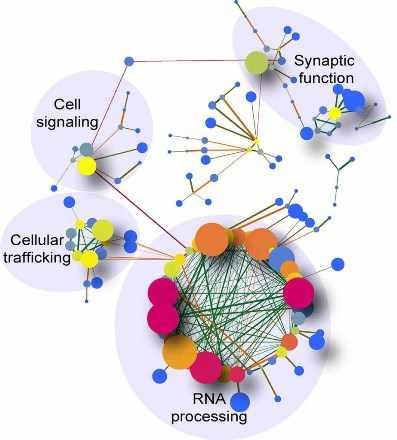 Demostración de la relación entre los ARN diferentemente procesados en la región del cerebelo de pacientes con c9ALS.
