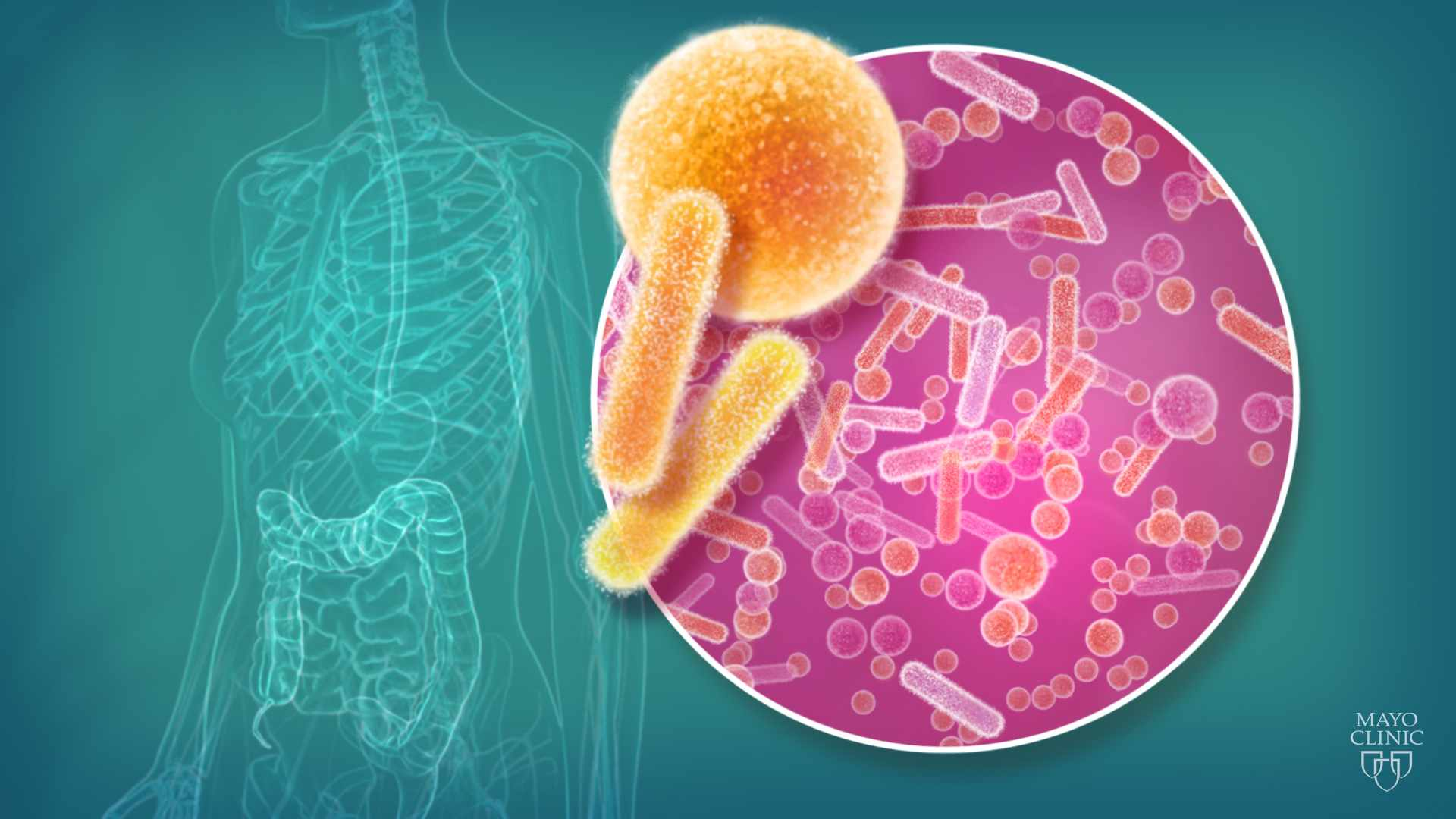 cellular image of microbiome