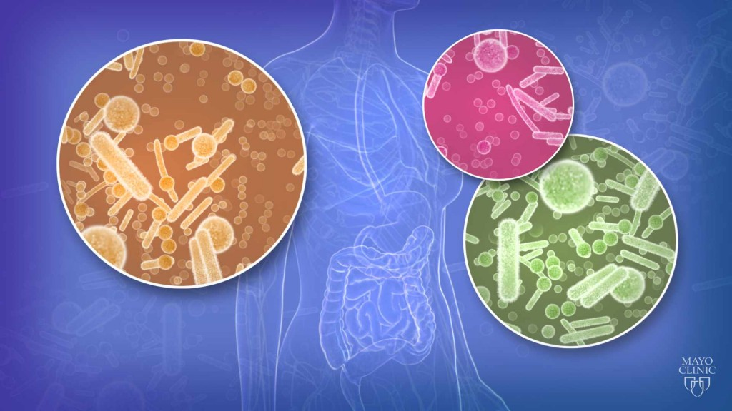 medical illustration depicting bacteria and the human microbiome