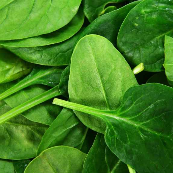raw baby spinach leaves