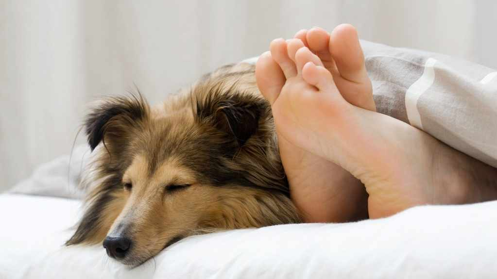a dog sleeping in bed with a person