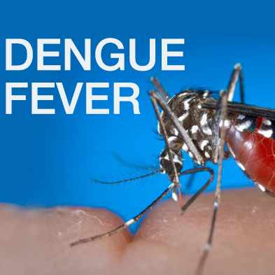 """""""dengue fever"""" text on an image of a female Aedes albopictus mosquito"""