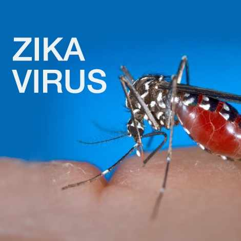 Zika virus text over a photograph of a mosquito on a hand