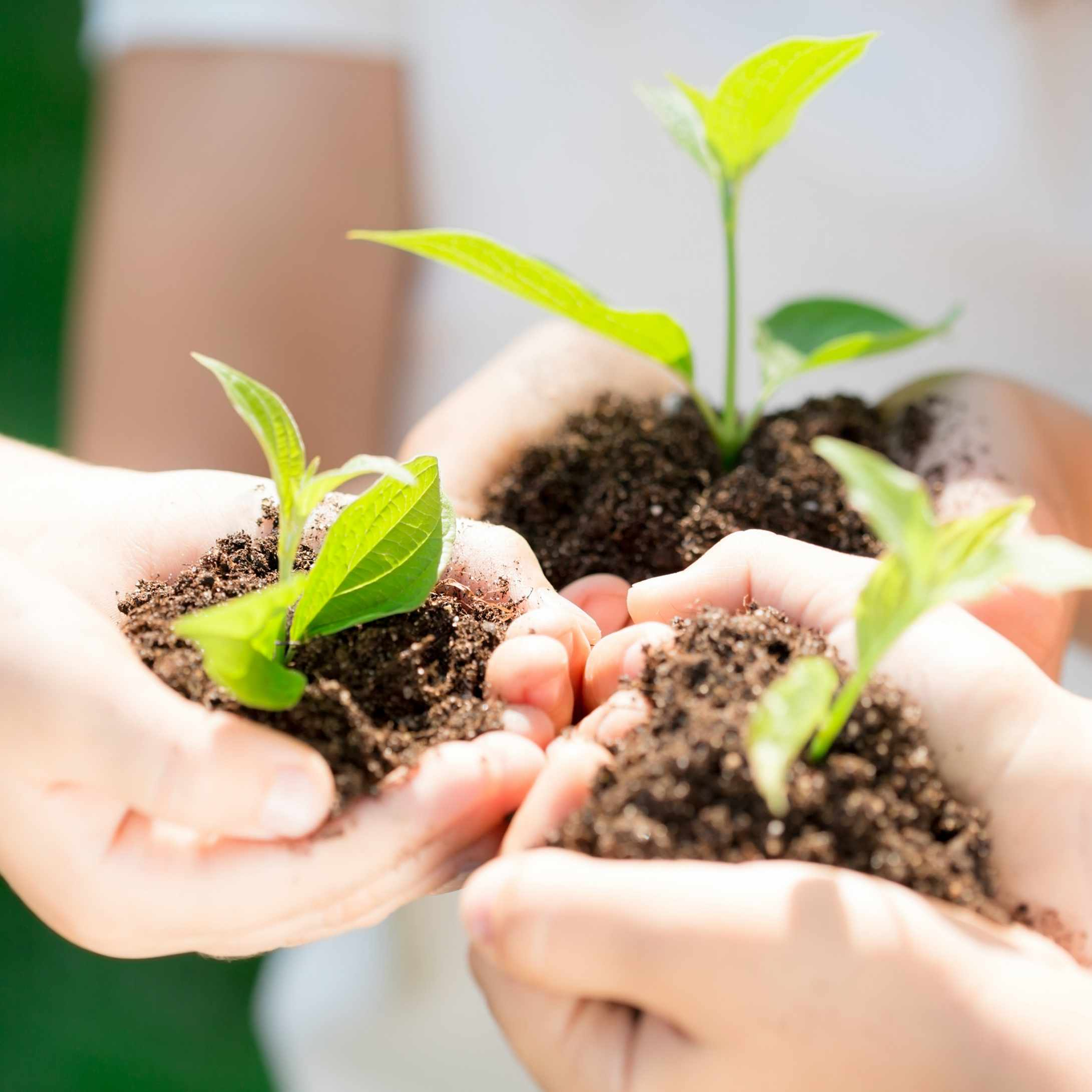children's hands holding green plants and dirt in their hands, representing new life and environment