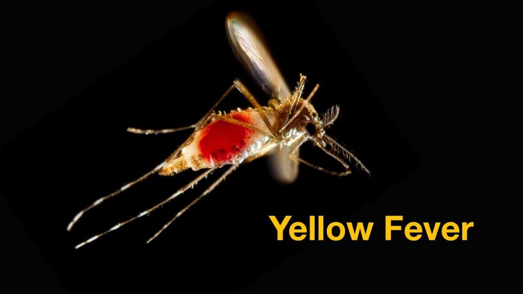 a mosquito in flight with yellow fever written in the graphic