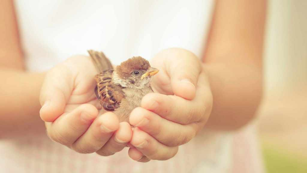 a sparrow sitting in child's hand showing kindness