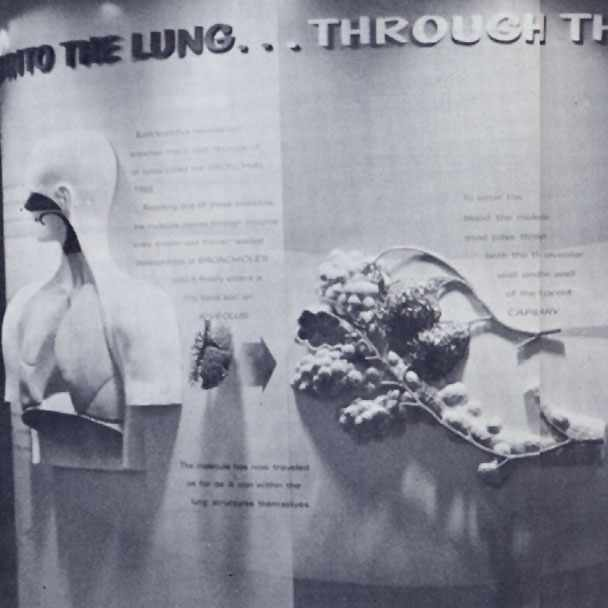 """the new exhibit """"The Vital Process of Breathing,"""" installed in the Mayo Medical Museum, created by the Section of Medical Illustration"""