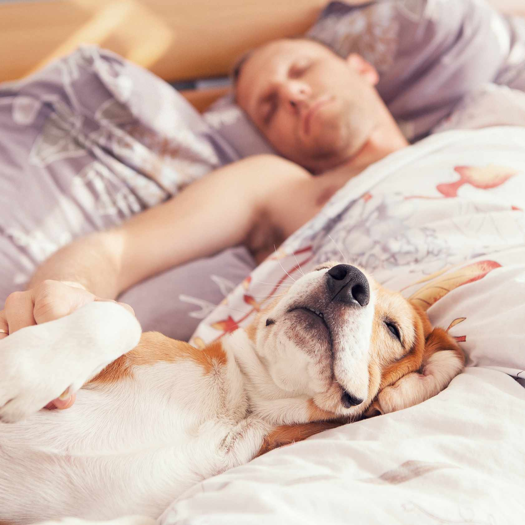 two pets, a cat and a dog, sleeping on someone's bed with pillows