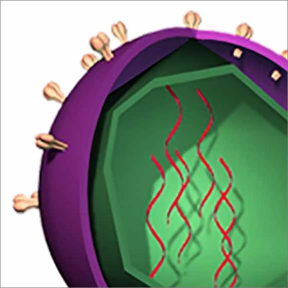 a medical illustration of the hepatitis C virus