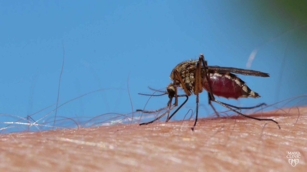 a mosquito is biting a person's skin