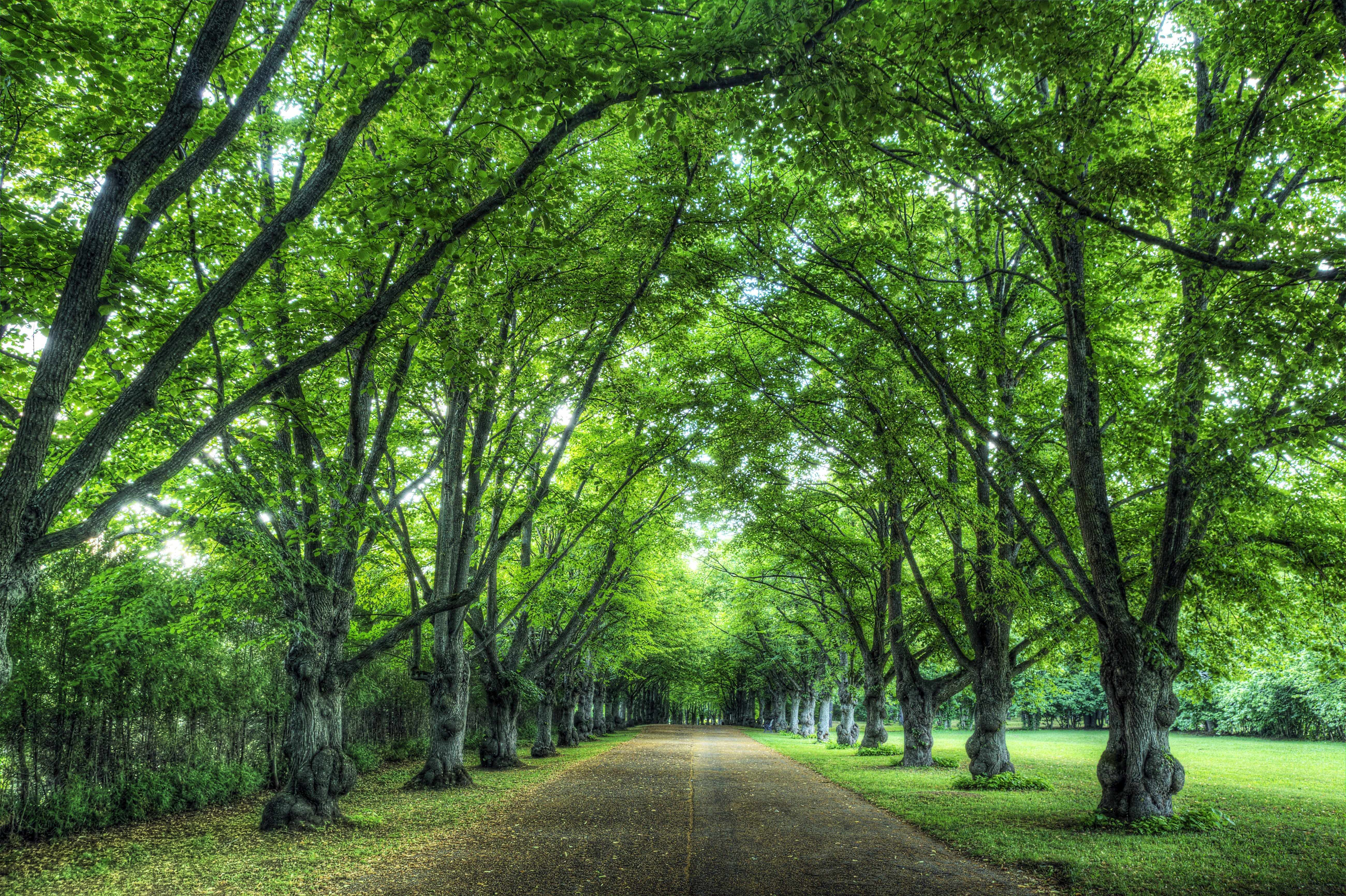 a road lined with green leafy trees, like a tunnel