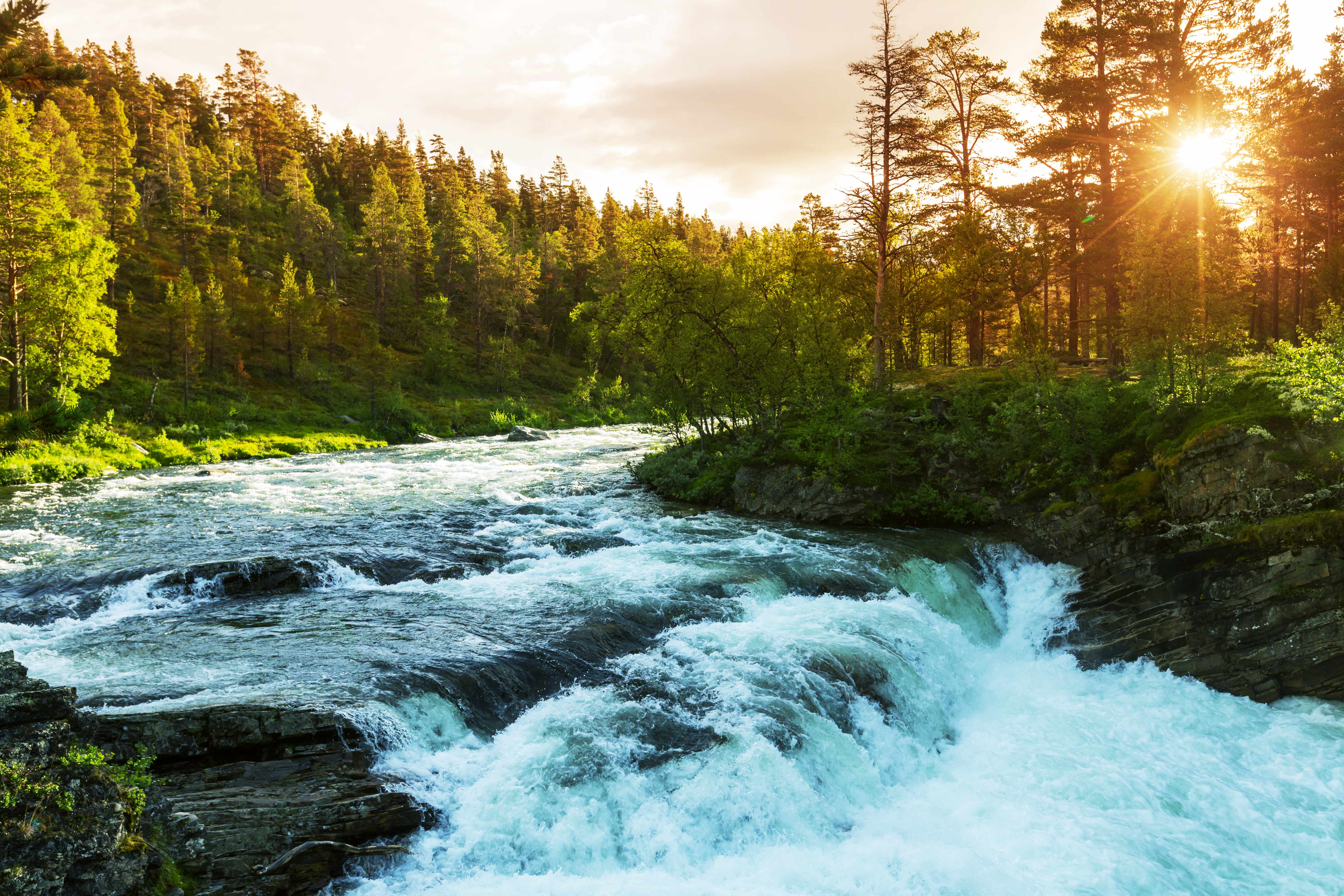 a rushing river with white-water through the forest and sunlight streaming throug the trees