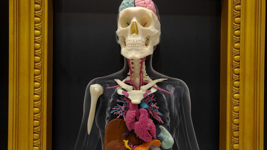 Modelo radiológico tridimensional del esqueleto humano