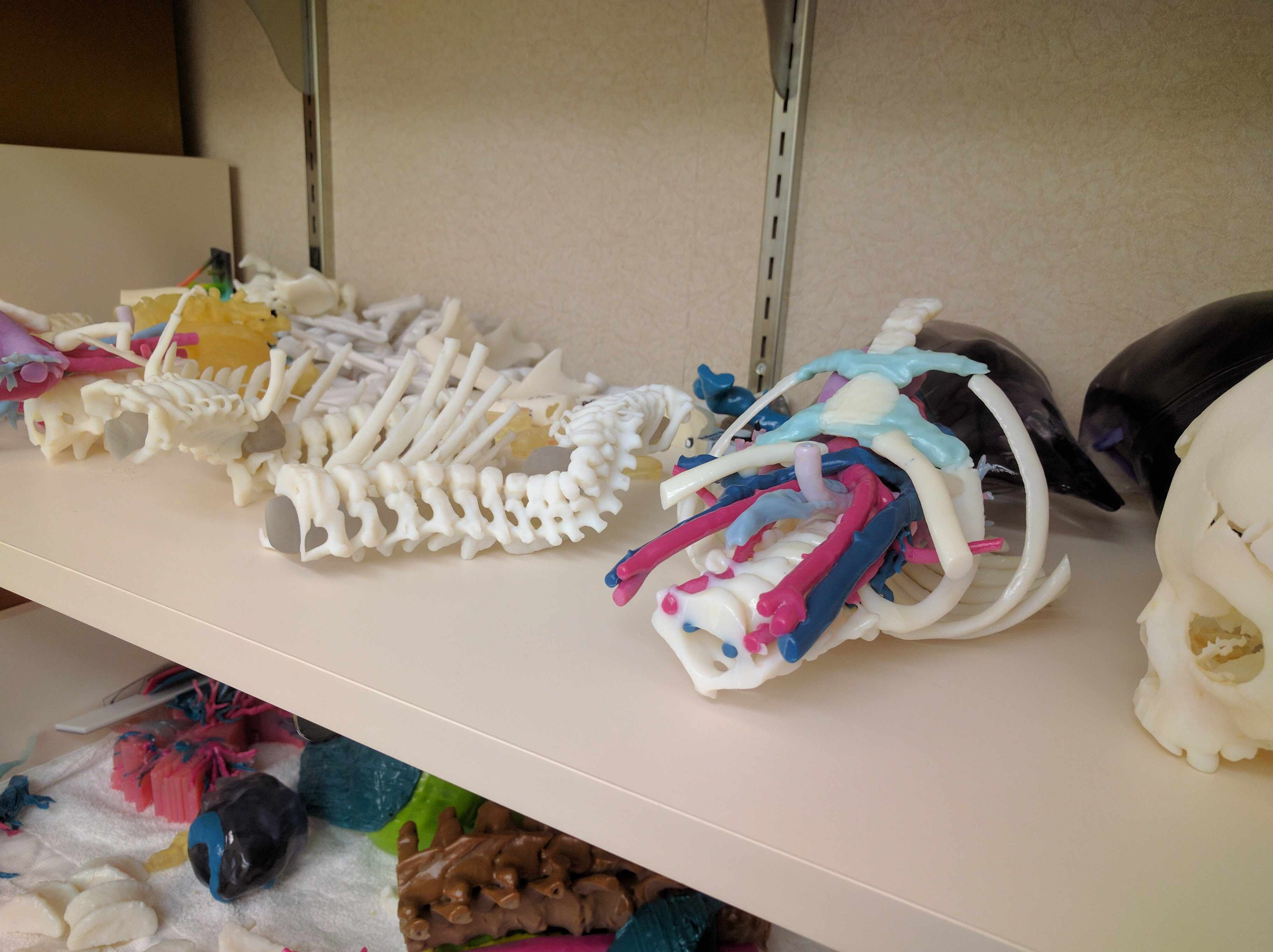 a shelf of various 3D models from radiology group